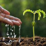 Automatische Bewässerung: So lassen sich Garten, Rasen & Pflanzen 2019 bewässern