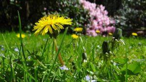 Sommer daheim im Garten